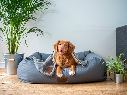 healthoftheday Your Pet Needs a Health Insurance, Too. Here's Why!
